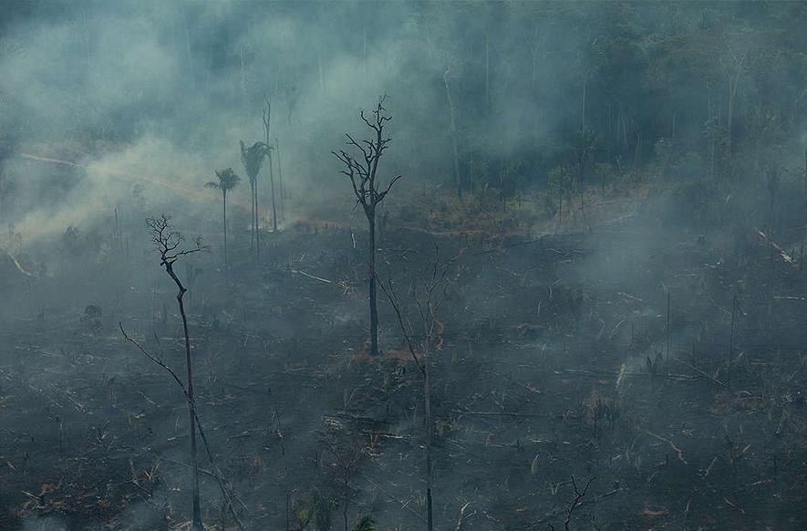 亞馬遜雨林持續大火,與畜牧業有關?!